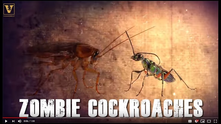 Karate Kicks Keep Cockroaches from Becoming Zombies, Wasp Chow