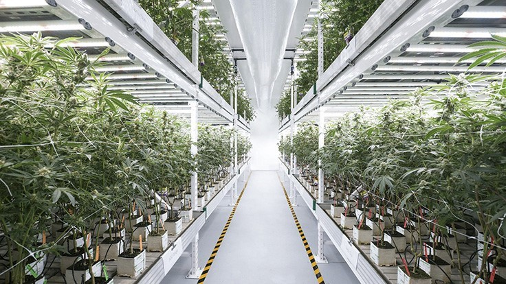 How to Decide Between Outdoor, Greenhouse or Indoor Cannabis Cultivation—And the Lighting Needed for Each
