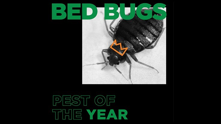 Terminix Names Bed Bug 'Pest of the Year'