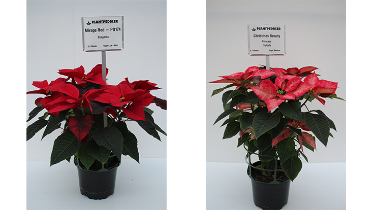 Plantpeddler releases results from 2018 poinsettia trial