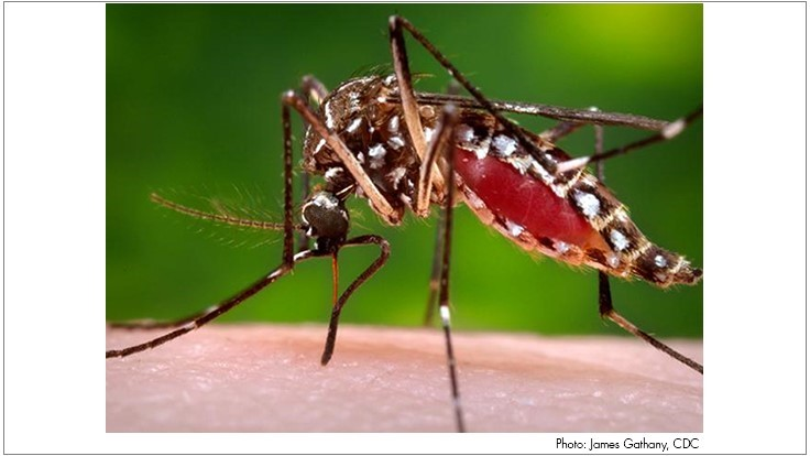 Research Provides Insights into How Dengue, Zika Link to Microcephaly