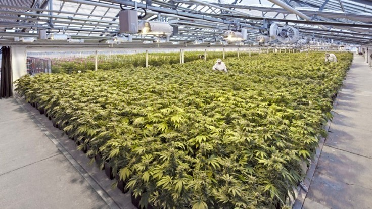Cannabis Acquisitions Highlight Coming Exponential Sector Growth