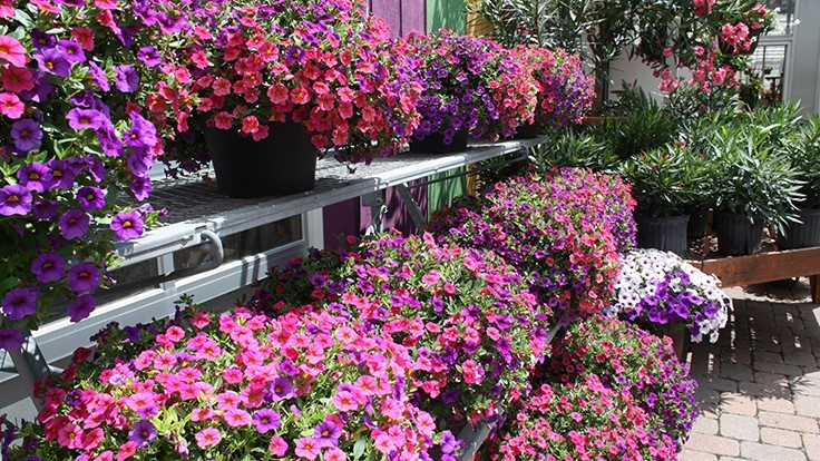 Foertmeyer & Sons Greenhouse closes retail store