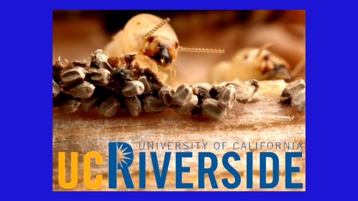 2019 UC-Riverside Pest Conference is March 20
