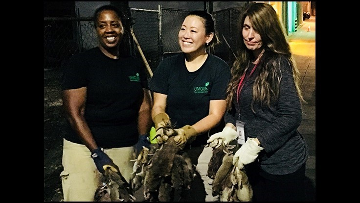 Unique Pest Management Expands to Boston