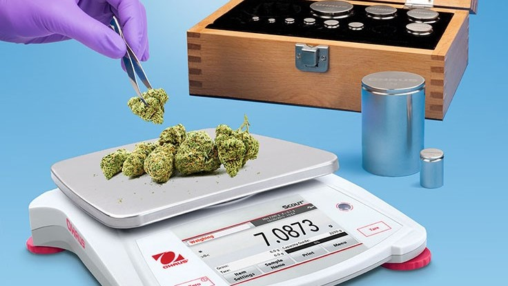 Cannabis Scale and Calibration Kit