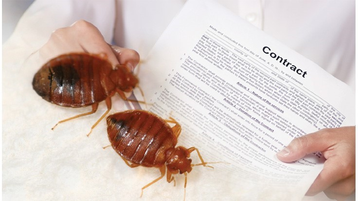 Philly Landlords on the Hook for Bed Bug Control Under Council Bill