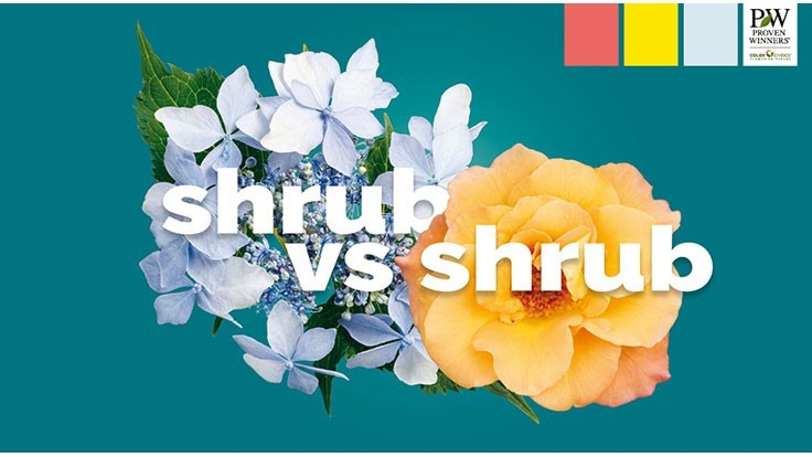 Shrub Madness tournament returns