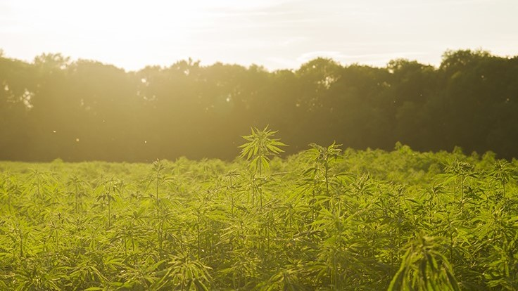 Building a Better Hemp Industry: Q&A on U.S. Hemp Authority's Certified Seal Program