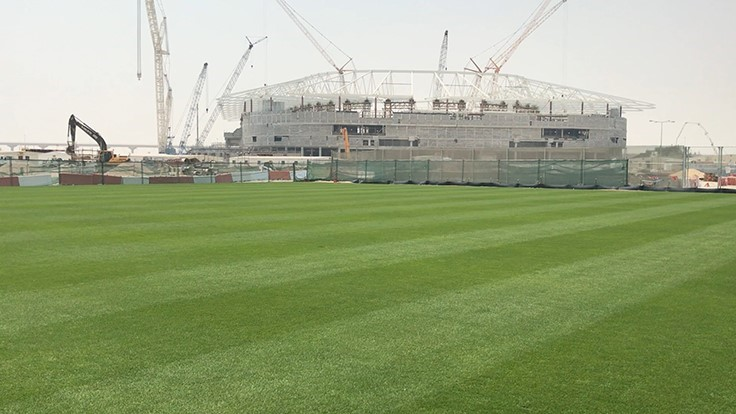 Platinum TE Paspalum selected as exclusive turfgrass for 2022 FIFA World Club