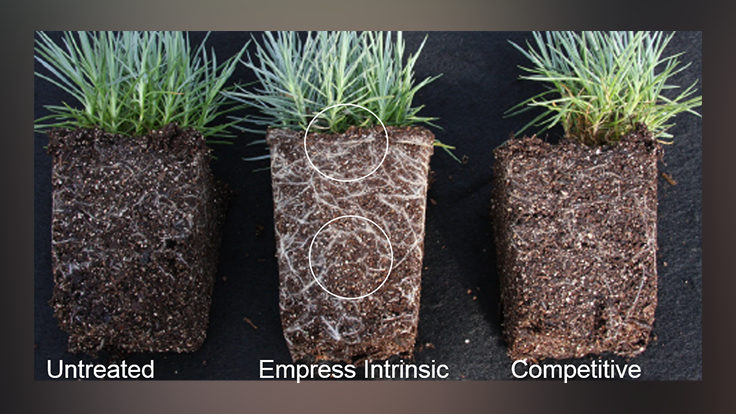BASF Intrinsic® brand fungicides provide disease control and plant health