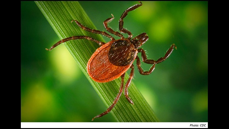 CDC to Track Ticks and the Diseases They Carry