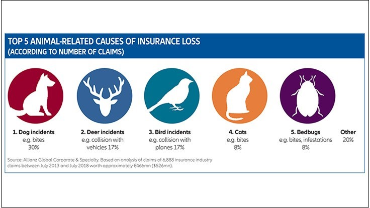 Bed Bug Incidents Account for Almost 8% of Animal-Related Insurance Claims, Allianz Reports