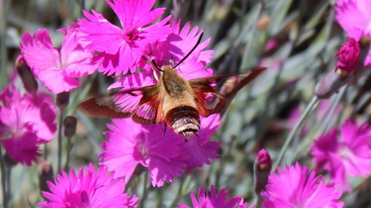 Pollinator gardens do best with a variety of plants