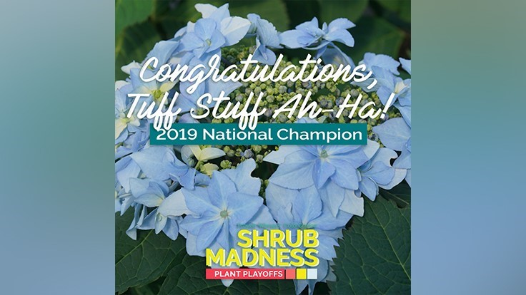 Proven Winners ColorChoice crowns its 2019 Shrub Madness winner