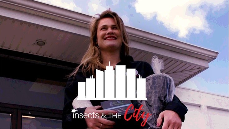 Premiere Episode of 'Insects in the City' YouTube Series Debuts