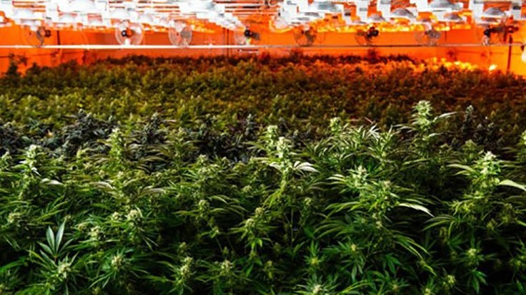 Acreage Holdings' Acquisition of Form Factory Sets Company on Path to Become 'Procter & Gamble of Cannabis'