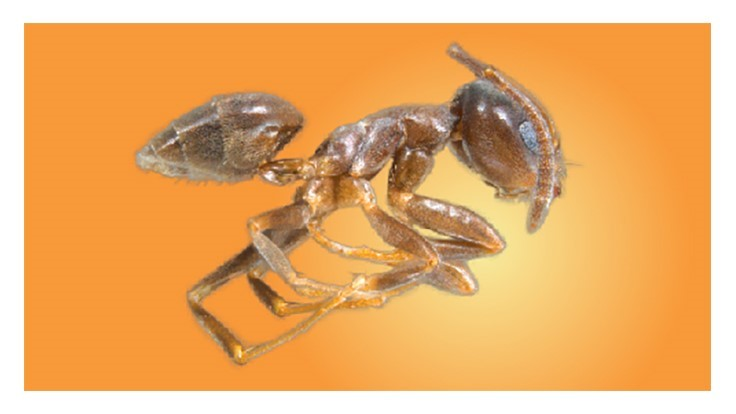 Poll: Ant Species Generating the Most Service Calls