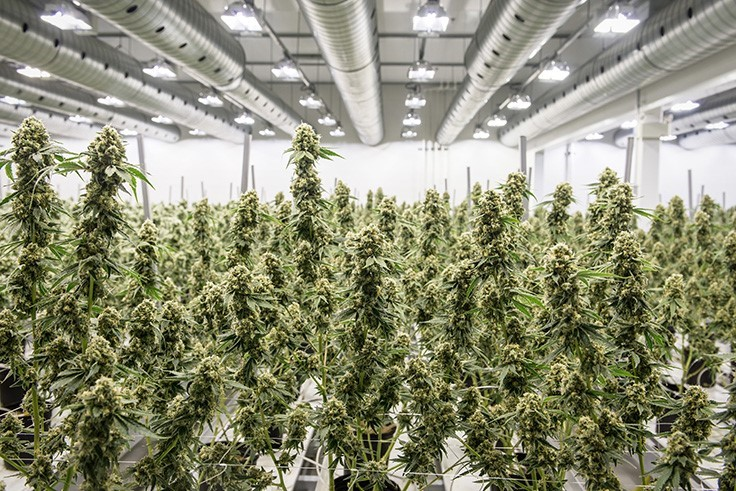 /canopy-growth-deal-acquire-acreage-holdings-cannabis-business-times.aspx