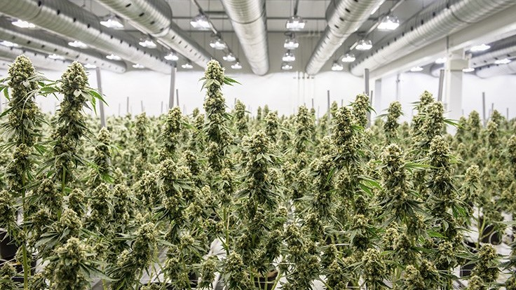 Canopy Growth to Acquire Acreage Holdings in $3.4-Billion Deal—Contingent on U.S. Federal Legalization of Cannabis