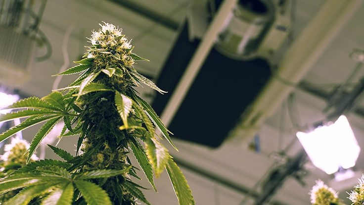 Monitoring, Controlling and Automating Your Cannabis Cultivation Facility