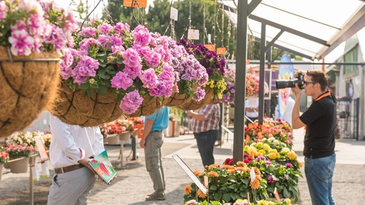 Dümmen Orange to showcase new products, retail trends at 2019 FlowerTrials