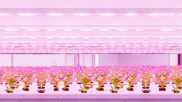Signify's new module designed for multi-layer crop production