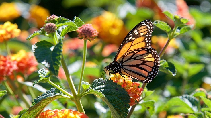 Pollinator preservation takes center stage