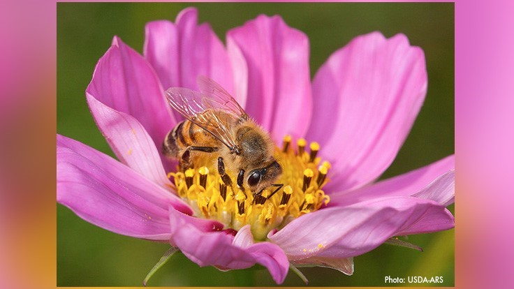 Rose Pest Solutions Partners with Gaiser Bee Company to Help Protect Pollinators