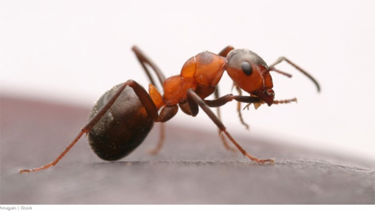 Seven Tips for Quickly Eliminating Large Ant Infestations