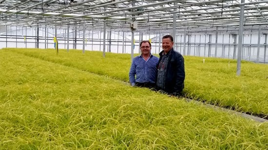 Concept Plants celebrates 10 years of EverColor Carex