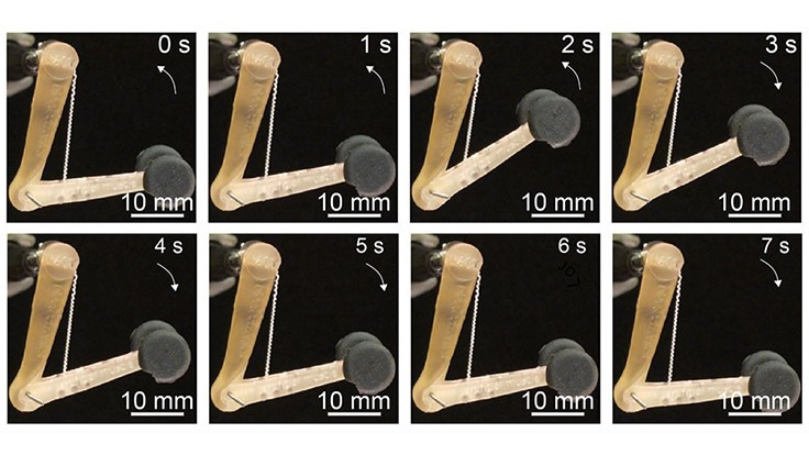 Artificial muscles achieve powerful pulling force