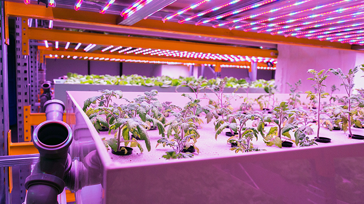 CanadaGAP to phase out aquaponics certification