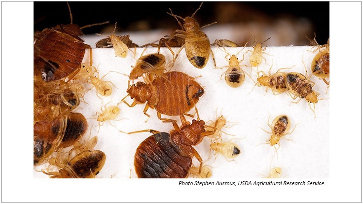 California City's Call Center Battling Bed Bugs