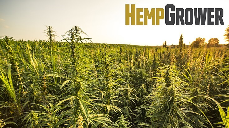GIE Media Inc. to Launch 'Hemp Grower'