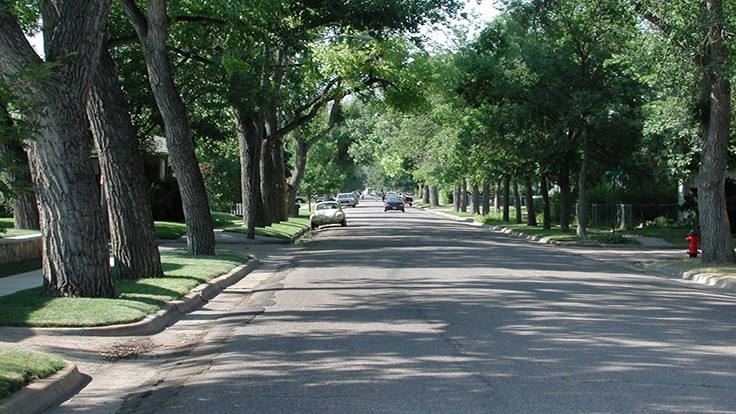 Dallas will produce its first Urban Forest Plan