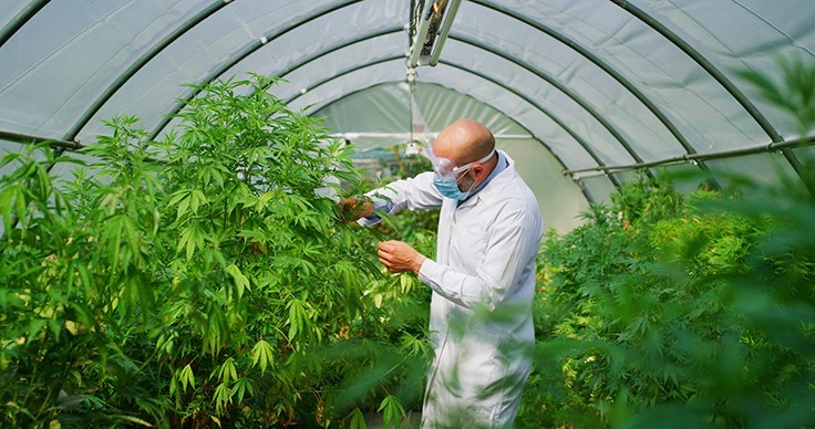 DEA Announces Steps to Expand Medical Cannabis Research