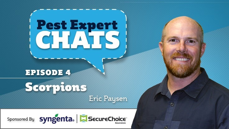 Pest Experts Chats — Episode 4: Scorpions