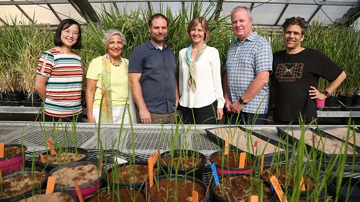 UC Riverside Plants-3D Program to Train Tomorrow's Ag Scientists