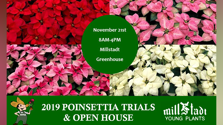 Millstadt Young Plants and N.G. Heimos Greenhouses to host Poinsettia Trial Open House