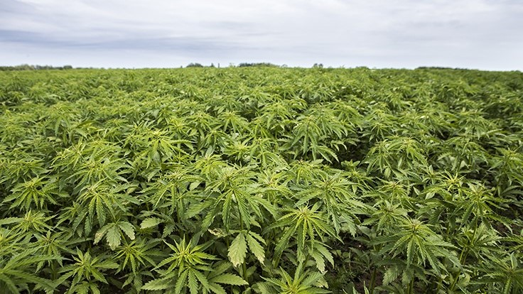 Here's How to Provide Public Comments on the USDA's Hemp Rules