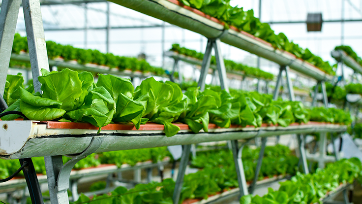 Aquaponics Association seeks signatures to support food safety in aquaponics