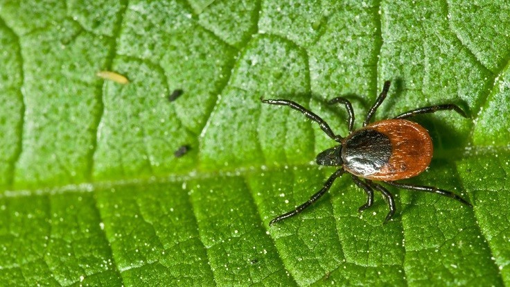 Reader Poll: Do You Offer Tick Control?