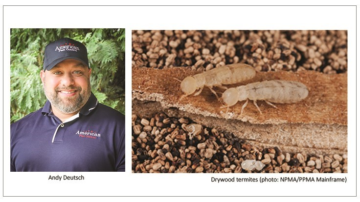 American Pest Control Technician Makes Rare Drywood Termite Sighting in Athens, Georgia