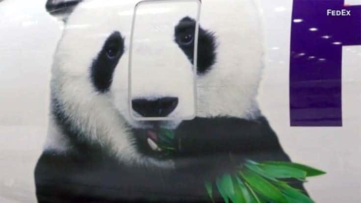 Bei Bei the giant panda returns to China in a private jet