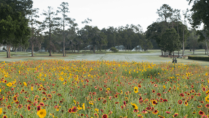 Per a UF study, wildflowers on golf courses help pollinators, save resources