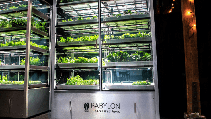 Inside modular farming company, Babylon Micro-Farms