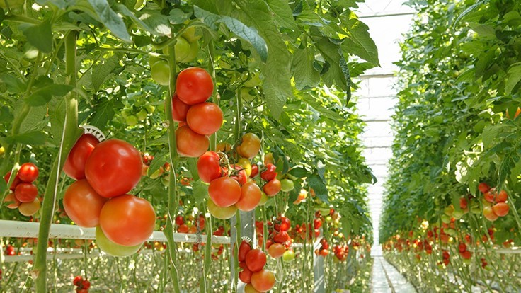 Take the 2020 State of the Tomato Market survey
