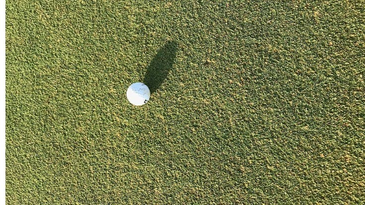 Superintendent-developed ultradwarf Bermudagrass receives patent