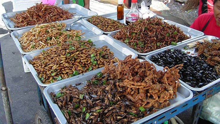 Asia Pacific Edible Insect Market is on a Growth Trajectory